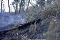 BMKG Juanda Pantau Sejumlah Titik Api Di Jawa Timur