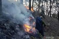 Area Terdampak Kebakaran Hutan Gunung Arjuno Capai 3.000 Hektare