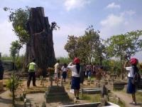 Pohon Misteri di Desa Joho Kabupaten Kediri