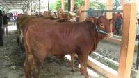 Jelang Idul Adha, Harga Hewan Kurban di Kota Blitar Mulai Naik