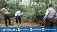 Mayat Tanpa Identitas Ditemukan di Hutan Lamongan, Tubuhnya Melepuh, Rambut Rontok & Tangan Hancur