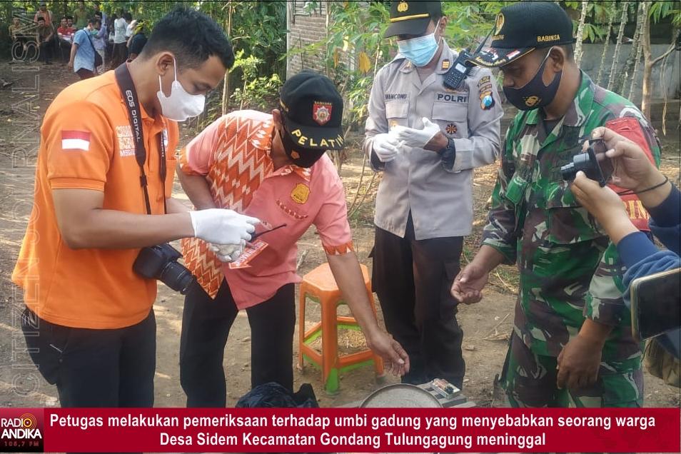 Gondang_Tulungagung_Umbi_Gadung.jpg